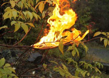 La « Période rouge » risque incendie commence le 1er juillet