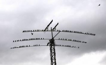 Influenza aviaire : les mesures de biosécurité
