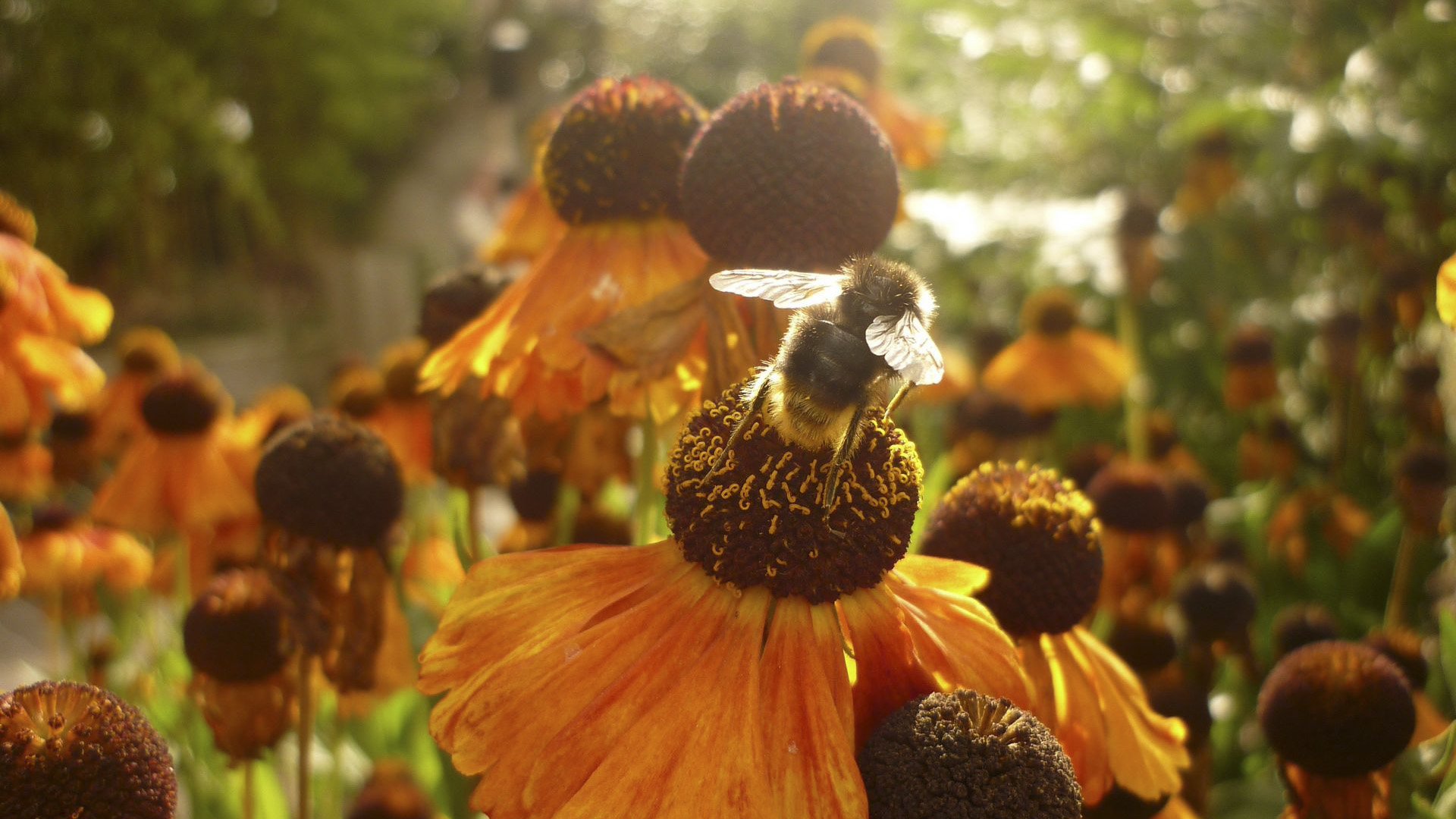 souffleurs-abeille2