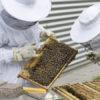 déclaration de ruches