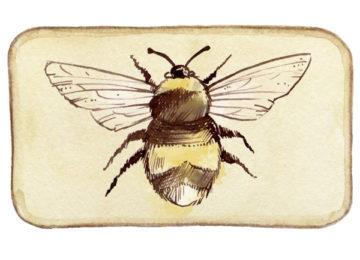 Conférence « L'Homme et l'abeille, une histoire plurimillénaire racontée par la chimie et les poteries »