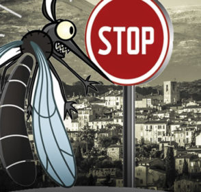 Prévention contre le moustique tigre