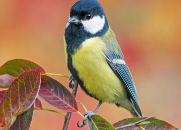 L'Observation des oiseaux
