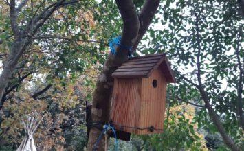 Premier inventaire de la Ligue de protection des oiseaux aux jardins partagés des Bâchettes