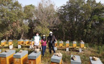 Les abeilles au septième « miel » de Biot